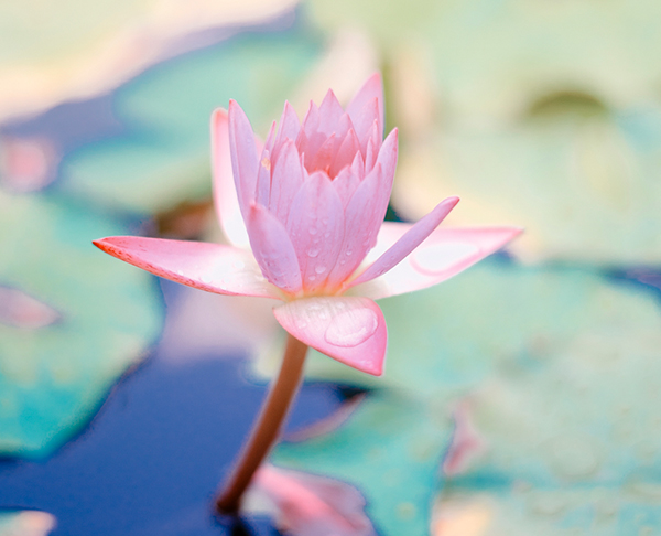 Mindfulness-y-Autocompasion